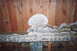 Le champignon des maisons humides : la mérule